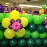 Singapore Large Balloon Flower