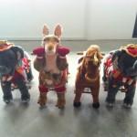 Animal Rides Rental